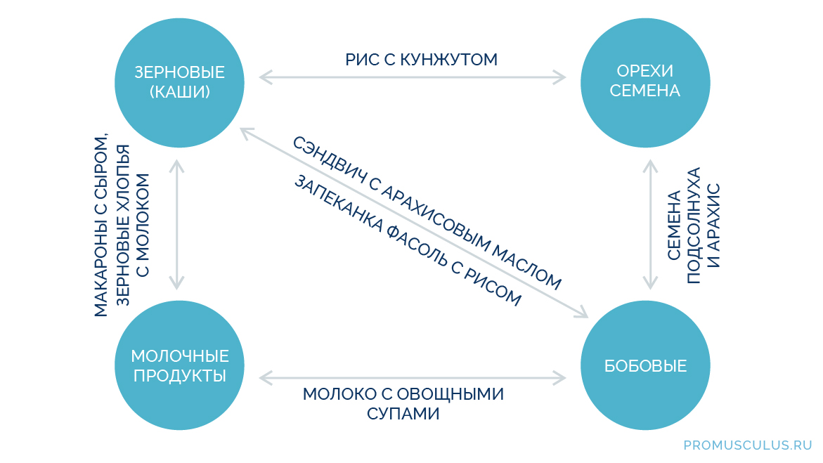 Чем заменить протеин в домашних условиях: схема комбинирования растительных продуктов для получения полноценного белка